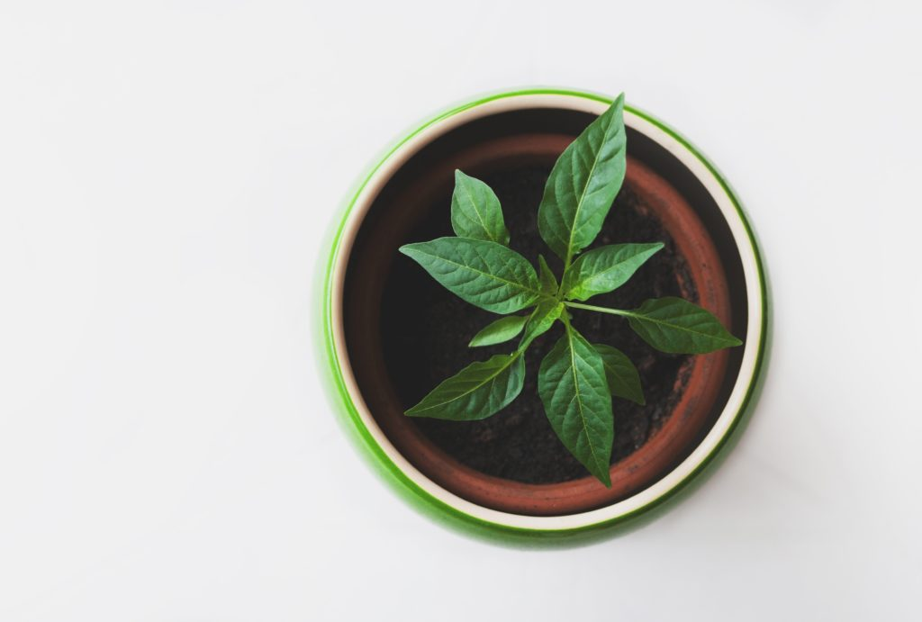 three ways that lemon balm can reduce your anxiety